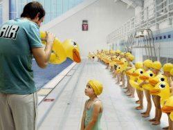 JEM Water Ducks